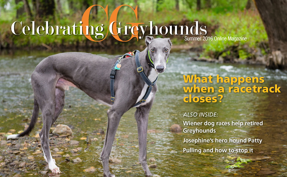 Celebrating Greyhounds Magazine  Spring 2008